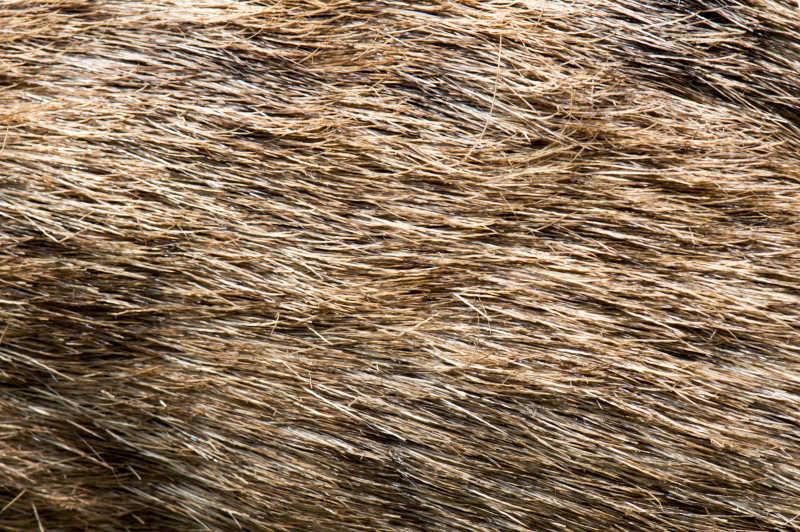 动物身体的毛皮
