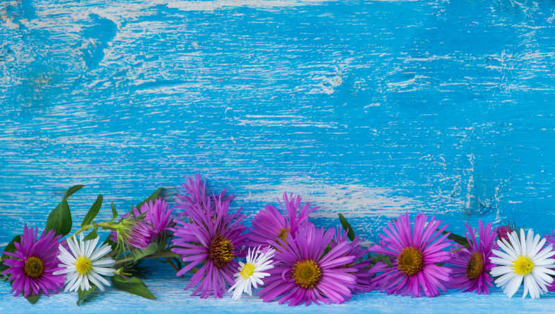 紫色与白色的花