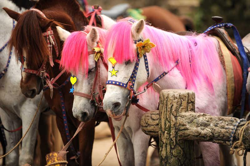 在牧场的粉色鬃毛和棕色鬃毛的白马