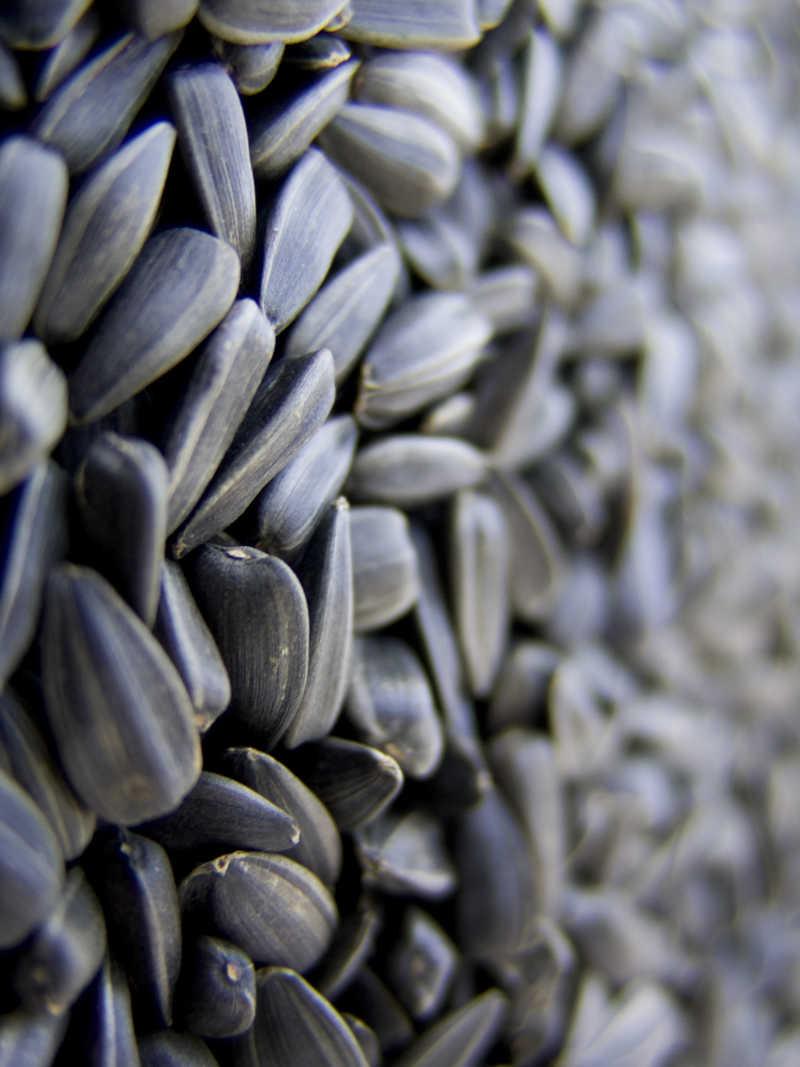 烘干的葵花籽