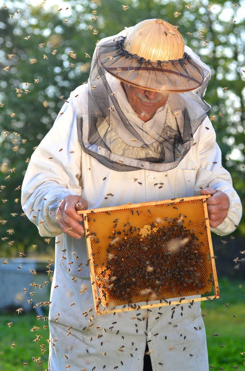 养蜂人与蜜蜂