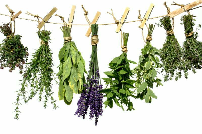 白色背景下挂在晾衣绳上晾晒的绿色草本植物