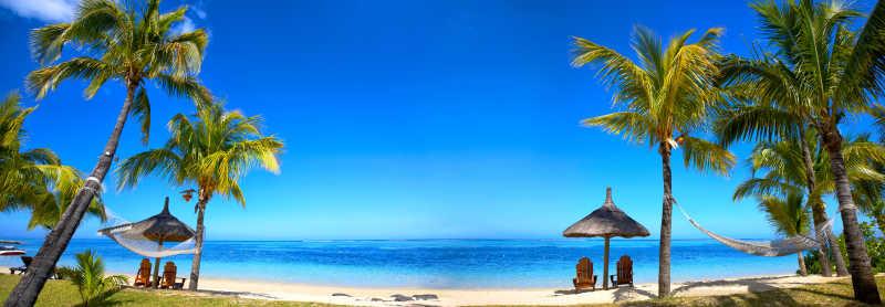 美丽的海滩边矗立着两排椰树