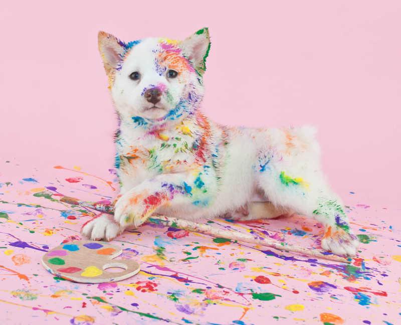 粉色背景上的全是颜料的白色小狗