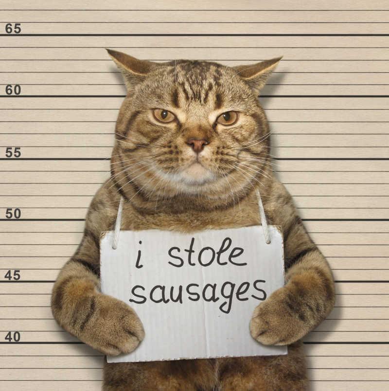 一只苏格兰直猫被判偷香肠
