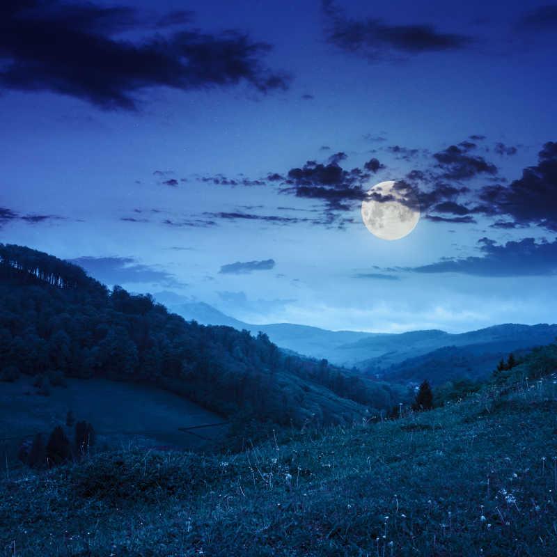 夜间的森林与天空
