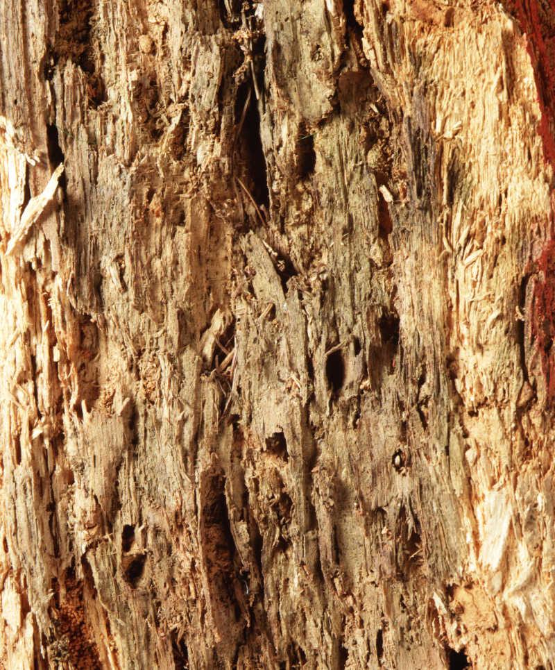 风化的木头