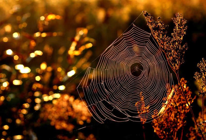 秋天早晨的蜘蛛网
