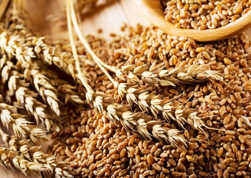 小麦籽粒和小麦穗