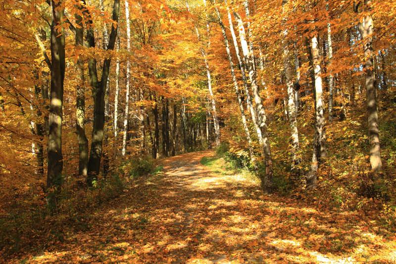 秋季公园里的风景