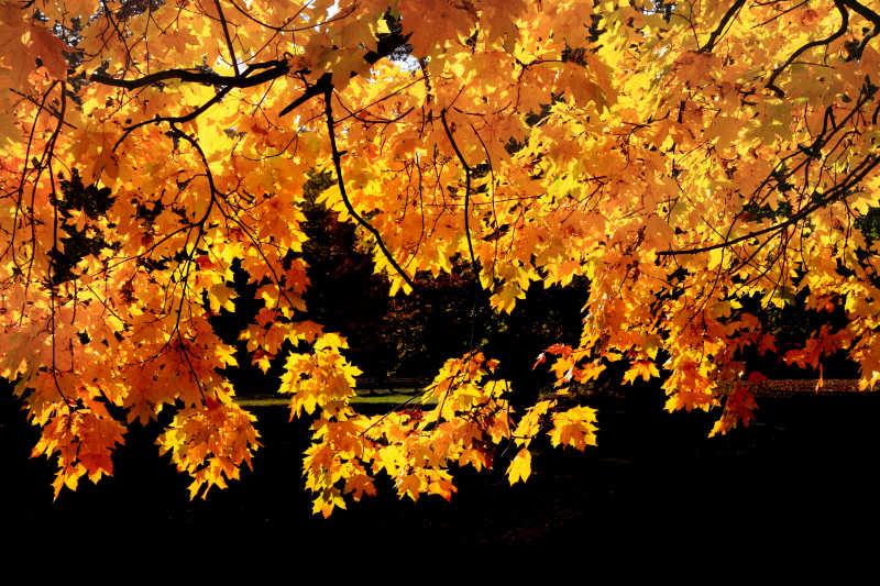 秋天的秋叶