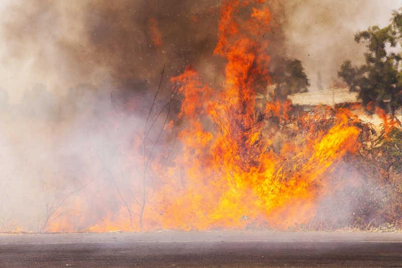 燃烧剧烈的森林火灾