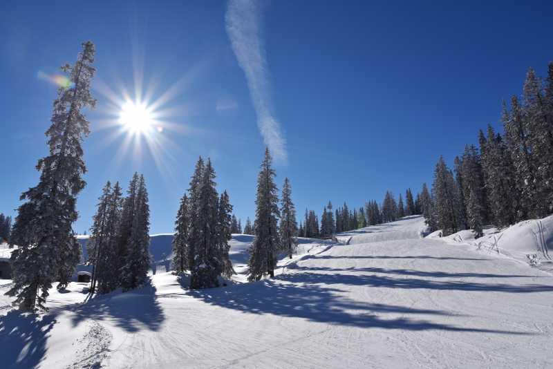 阳光下被大雪覆盖的森林