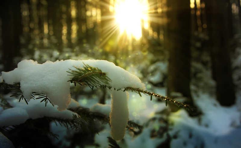 冬季森林的美丽日落
