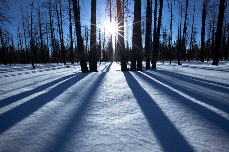 日落时分的冬季森林