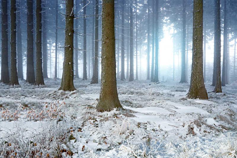雾蒙蒙的冬季森林