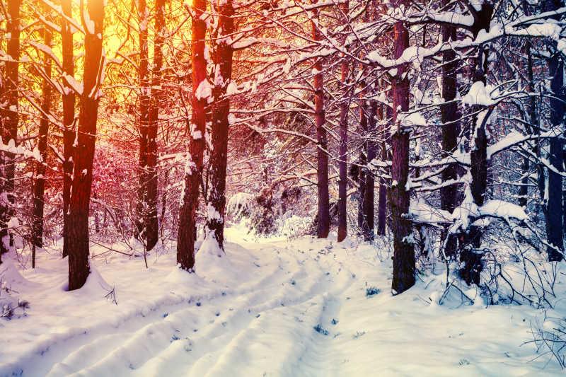 冬天夕阳下的森林