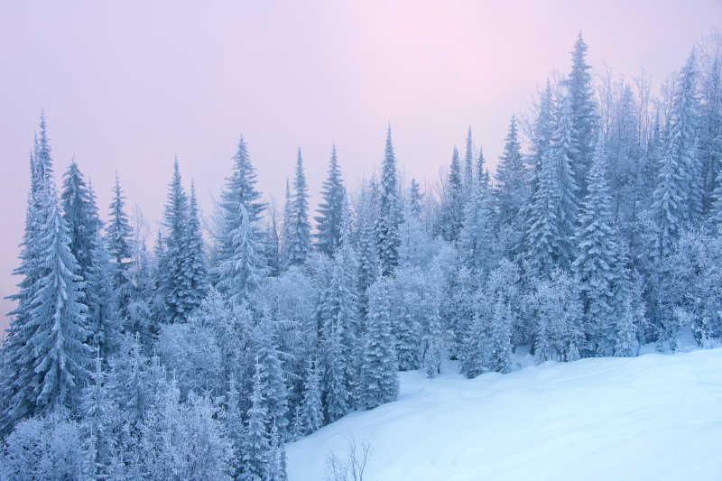 白雪覆盖的森林