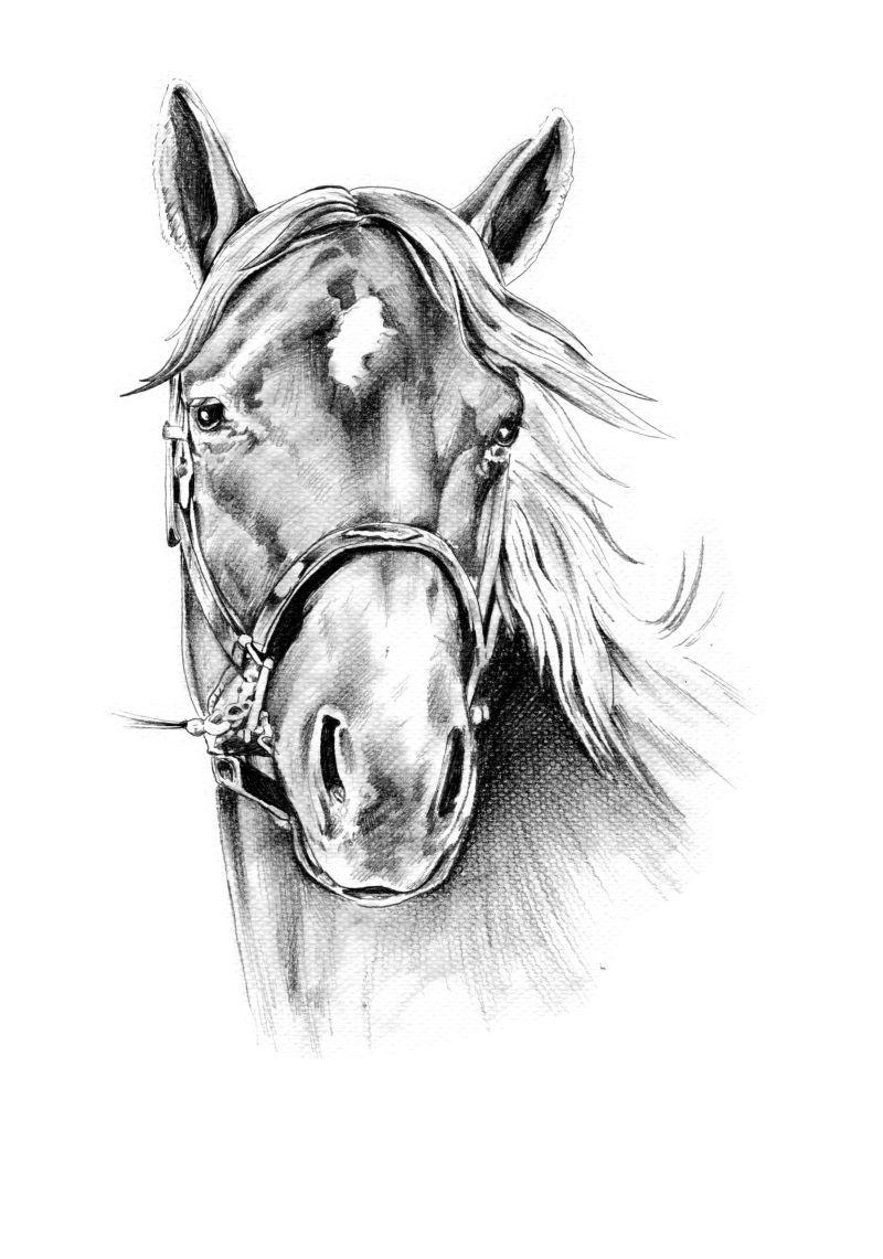 白色背景下的手绘铅笔画马头像