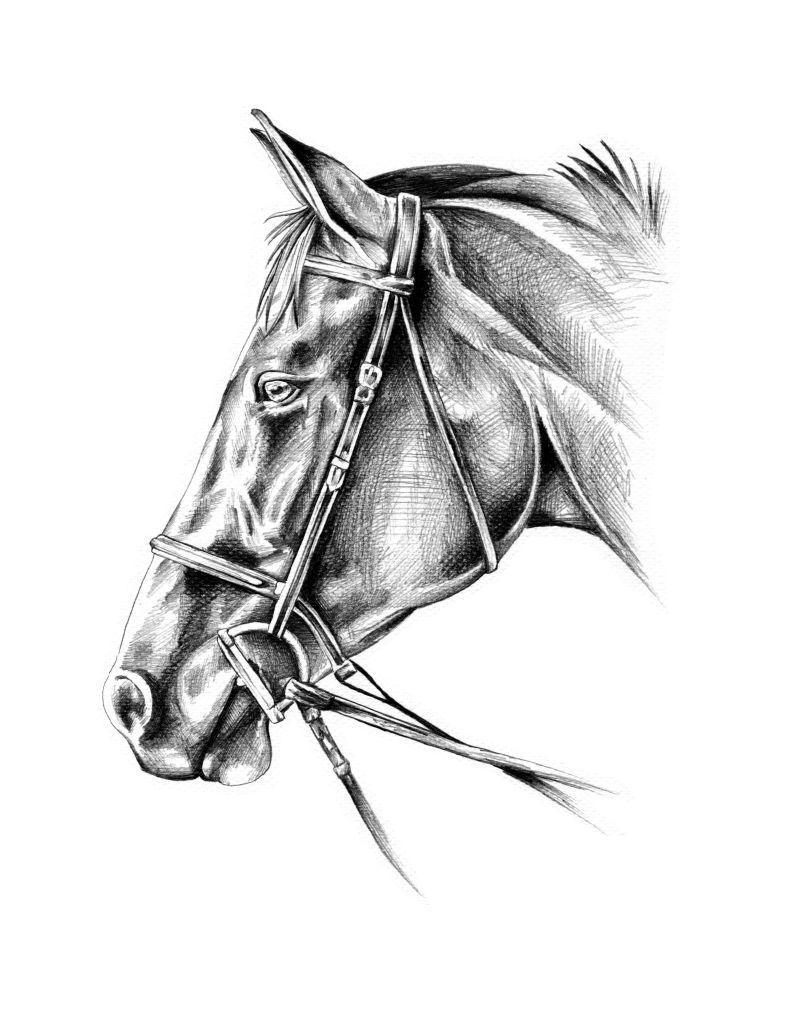 白色背景下的铅笔画马头像