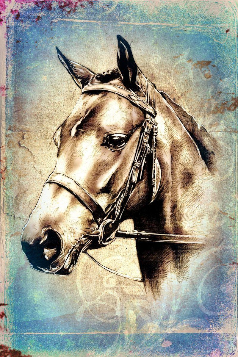 手工绘画马头