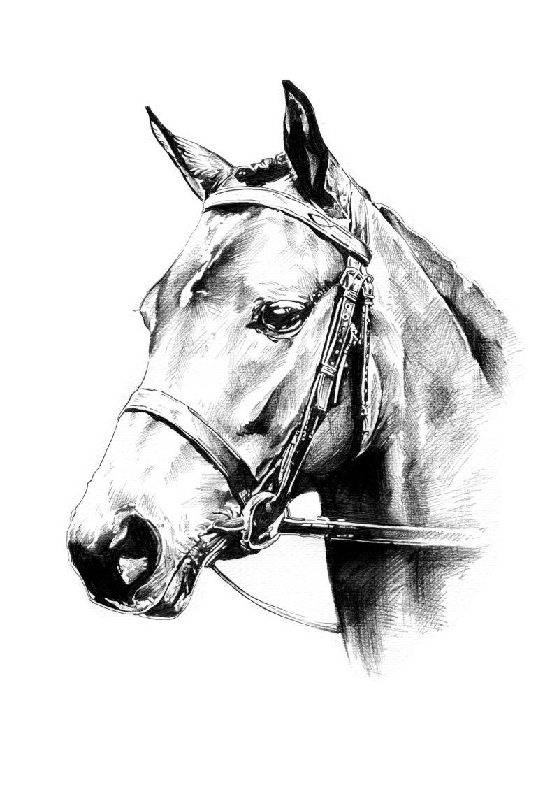 白色背景下手绘艺术马头像