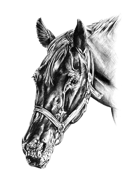 白色背景下的徒手铅笔画马头像