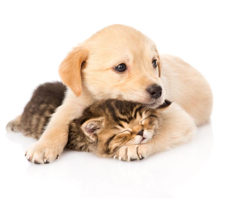 狗狗和猫咪在一起