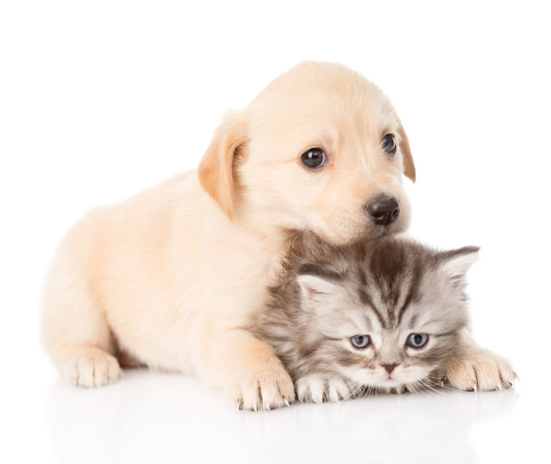 狗狗和猫咪玩耍