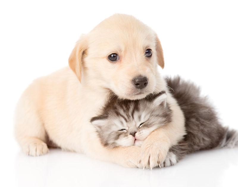 狗狗抱着咪咪