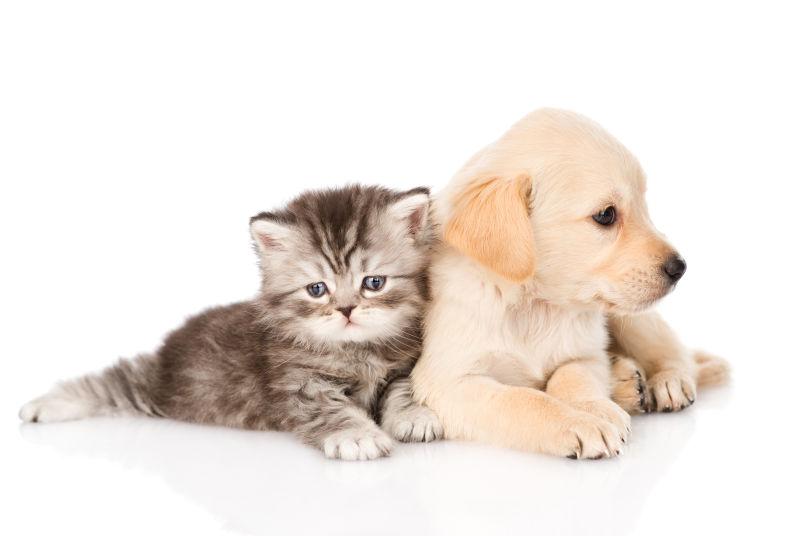 猫咪靠着狗狗
