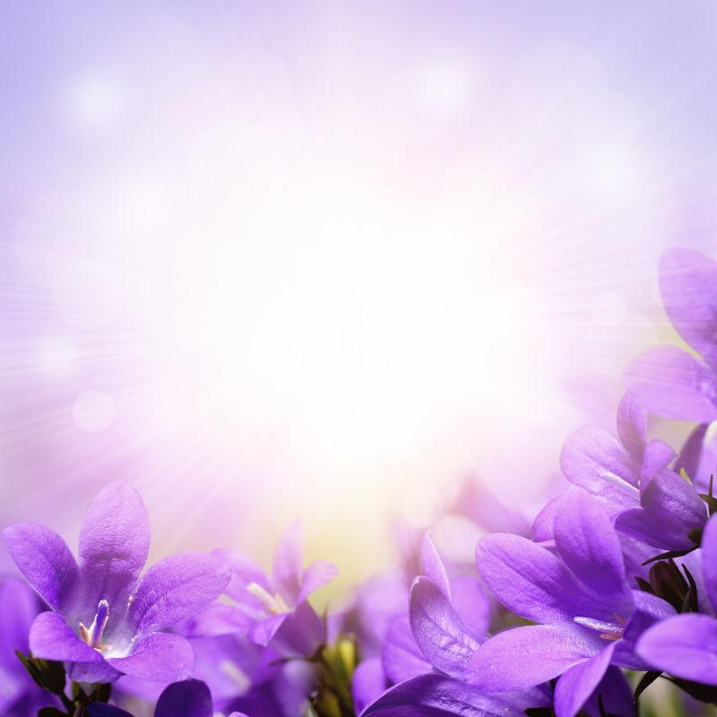 紫丁香边界背景
