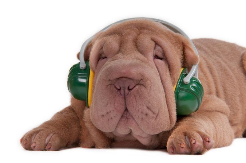 小狗用耳机听音乐