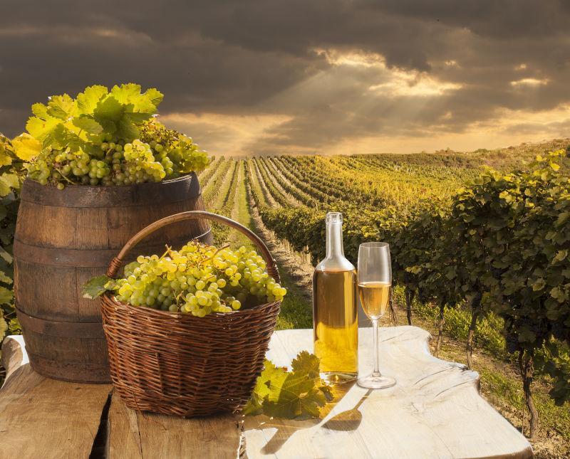 葡萄园白葡萄酒和葡萄