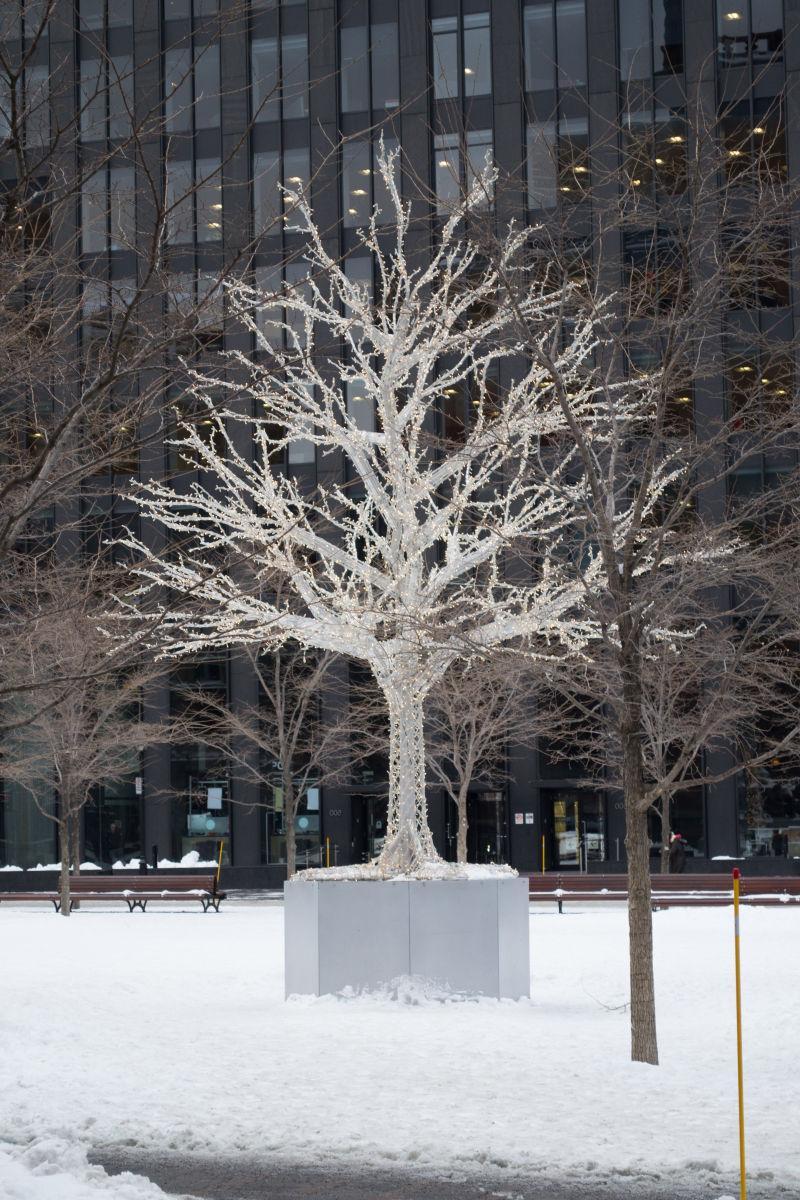 冬季大雪覆盖的树木
