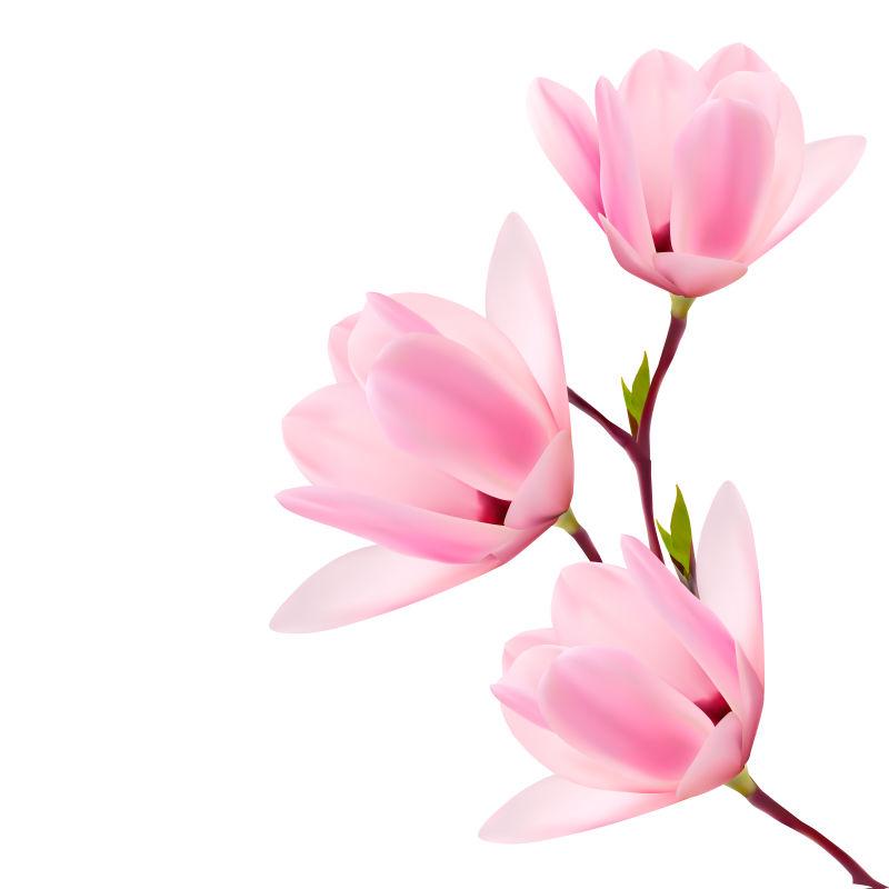 矢量的粉色花卉插图