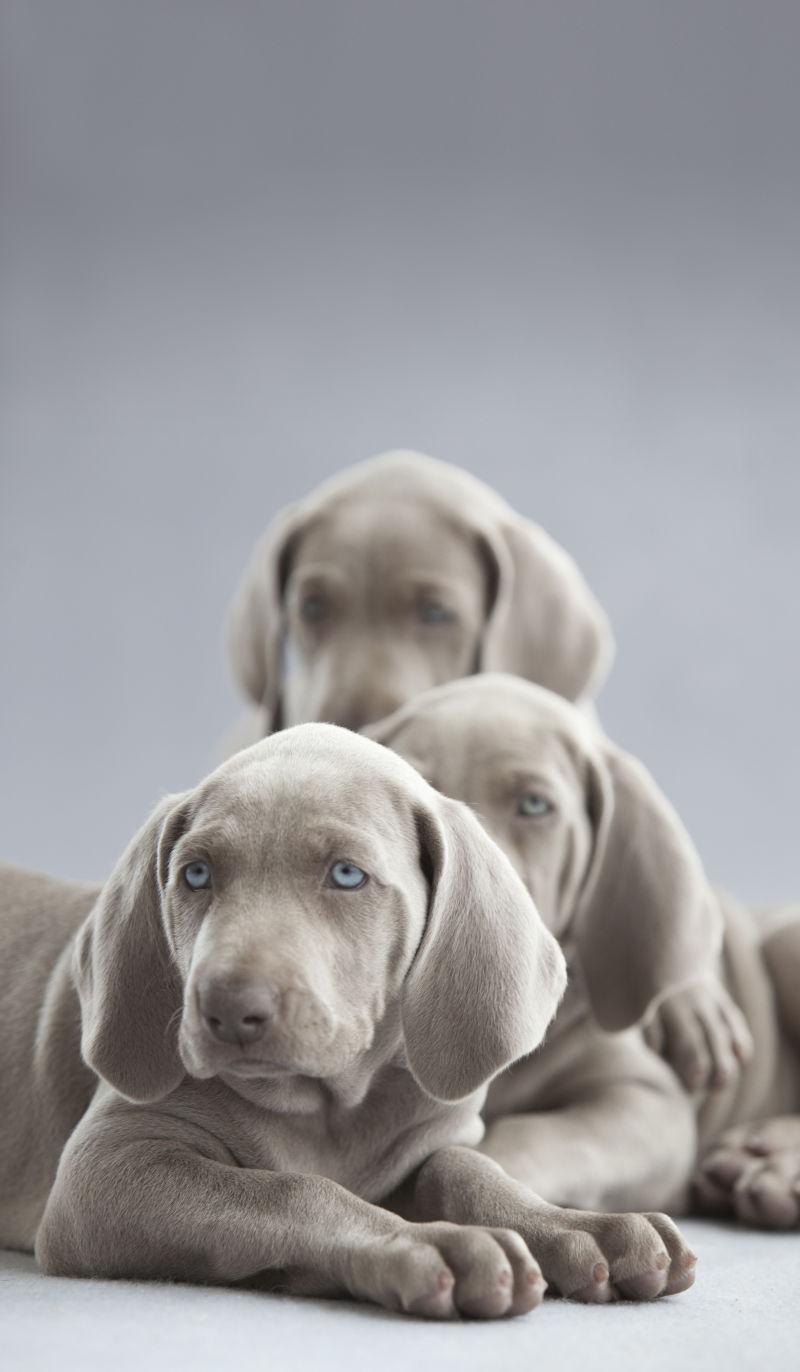 三只可爱的小狗狗