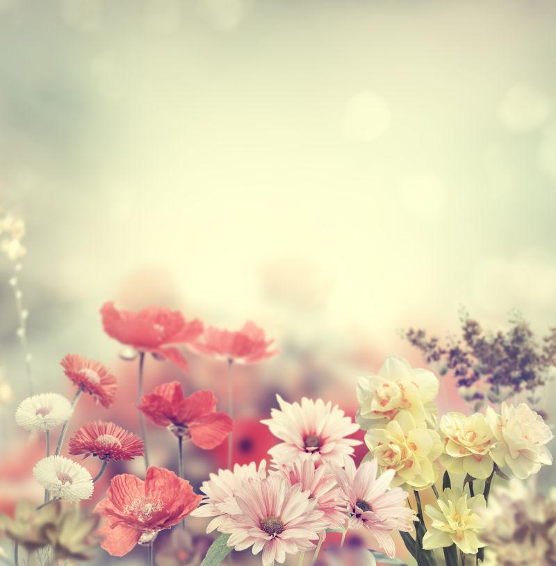 五彩缤纷的春天花朵