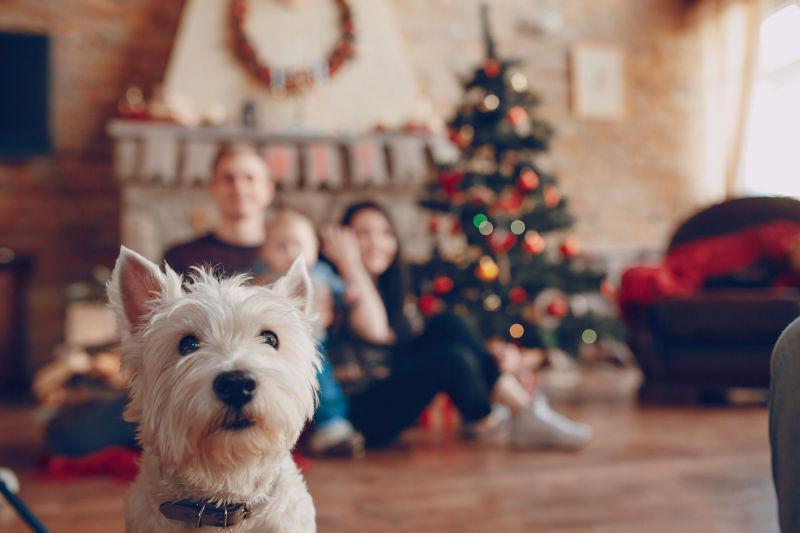 圣诞节快乐家庭和狗狗