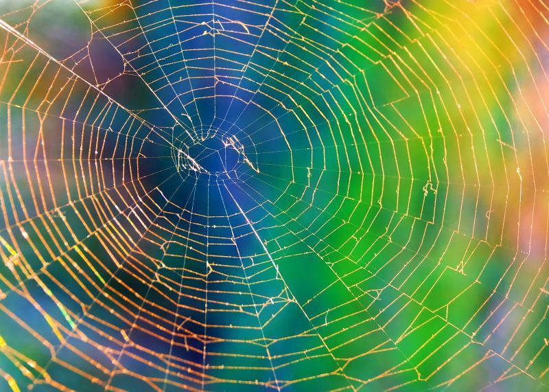 彩色花纹背景中的蜘蛛网