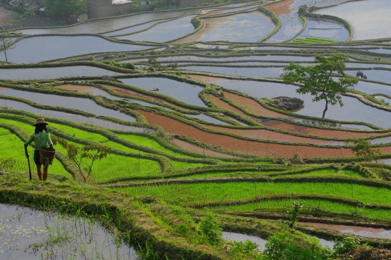 美丽的乡村水田景观