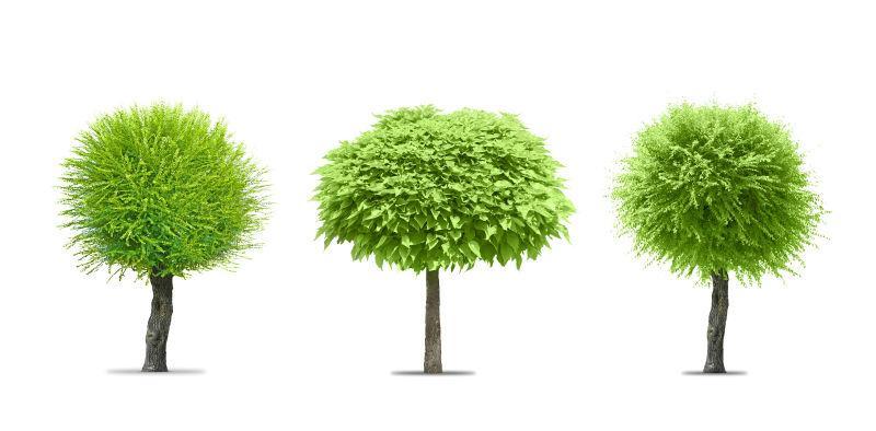白色背景上的三棵不同形状树木