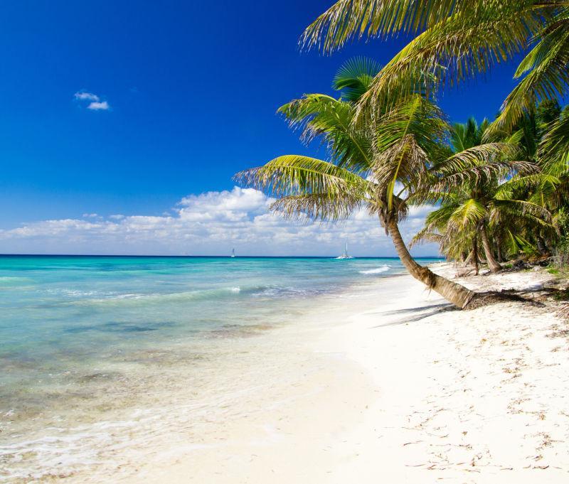 棕榈树在海边上