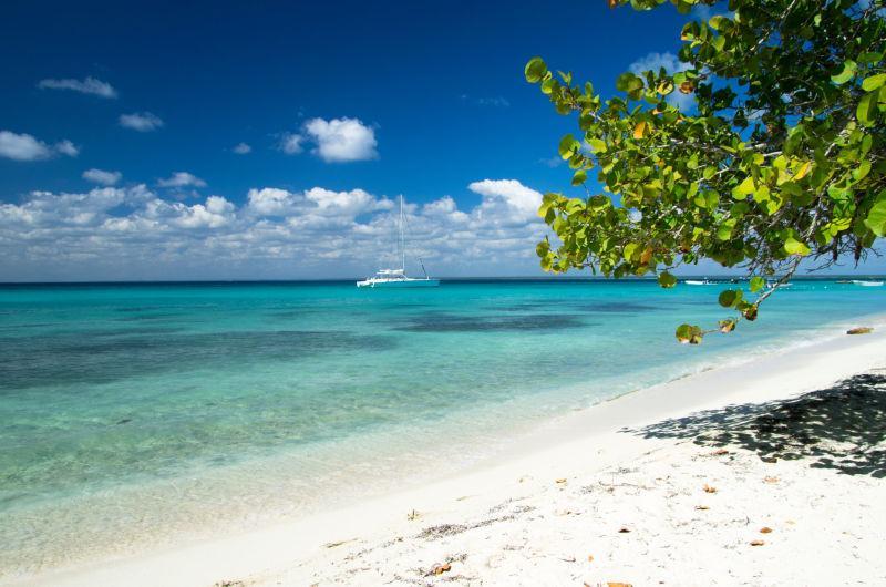 热带海滩棕榈树与清澈的大海