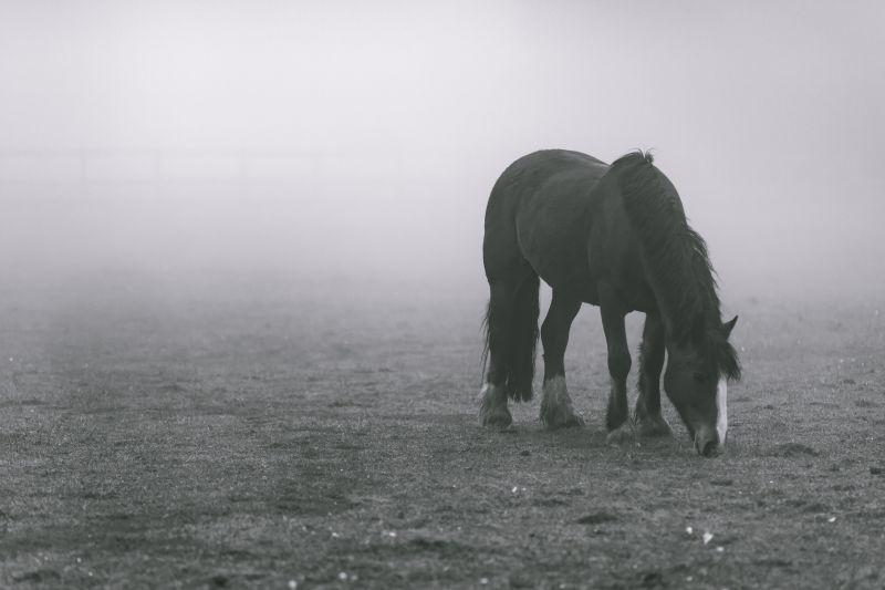雾中牧场里的马