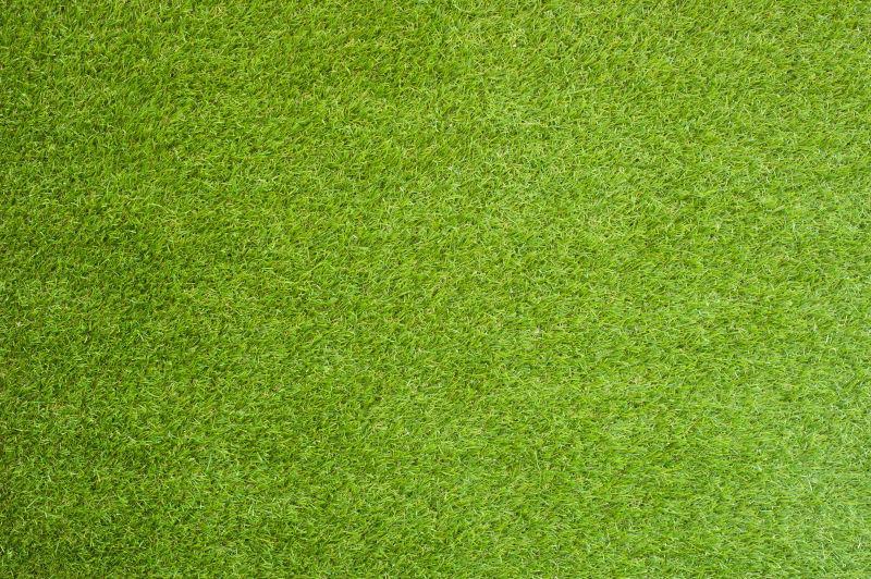 绿色稍稍发黄的草地