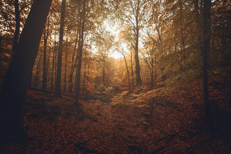 温暖的光下的秋季森林自然风景