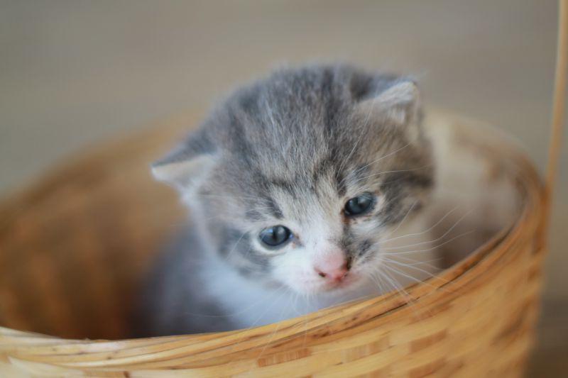 黄色背景下的竹筐里的小猫