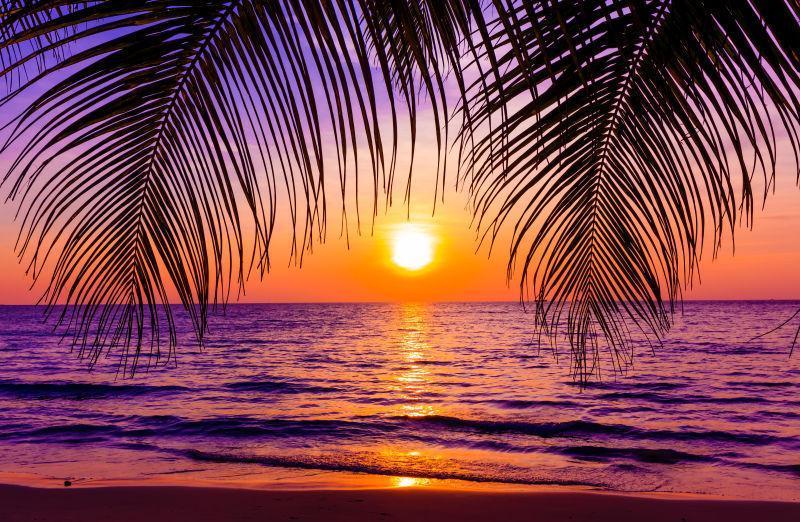 海边热带棕榈树上的日落