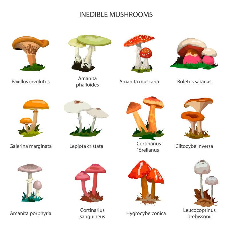 矢量的蘑菇丛矢量插图